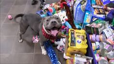 Shelter pets get to pick out their own Christmas presents this year.