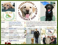 ECAD Service Dogs