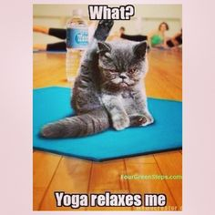 50 best yoga animals images  animals cute animals