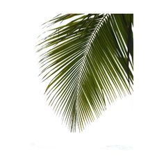 0_38a48_71908b58_XL.png ❤ liked on Polyvore featuring flowers, plants, palm, tropical and filler