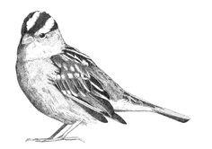Sparrow on Behance