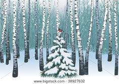 Birches in the winter forest