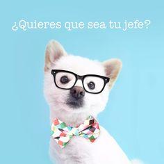 Te gustaría tener como jefes a @PerroInmortal @VeraDiMeO y @LoCocosito?  Entra a trabajo.wawaw.co  y déjanos tus datos para recibir nuestras ofertas si te gustaría: - trabajar en temporada alta - ser mimador de perros/gatos en nuestras tiendas - hacer trabajo de oficina - ser parte de nuestro equipo de marketing y publicidad - desarrollar aplicaciones - ser community manager - administrar nuestro sitio web  y sobre todo si eres proactivo comprometido sonriente y compartes nuestra filosofía…