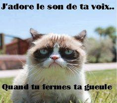 Grumpy Cat - J'adore le son de ta voix...quand tu fermes ta gueule
