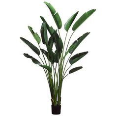 8' Bird Of Paradise Silk Palm Tree w/Pot -Green (pack of 2) -- Learn more by visiting the image link.