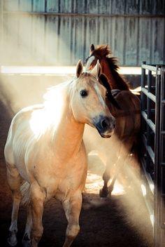 Lindo cavalo, bela cor!