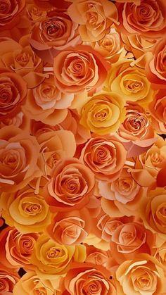 Flowers Orange Wallpaper Backgrounds Ideas For 2019 Orange Wallpaper, Fall Wallpaper, Flower Wallpaper, Leaves Wallpaper, Orange Pastel, Orange Flowers, Orange Color, Orange Aesthetic, Rainbow Aesthetic