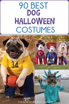 90 Best Dog Halloween Costumes - Fidose of Reality Best Dog Halloween Costumes, Halloween Photos, Dog Costumes, Dog Photo Contest, Movie Characters, Dog Photos, Dog Walking, I Love Dogs, Funny Dogs