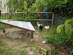 Sandbad für Hühner