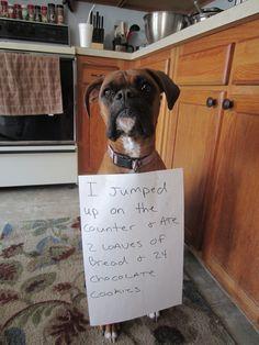 Dog Shaming. this would be my dog...