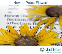 This is a guide about how to press flowers. Pressed flowers can be used in many craft projects. Pressing them is also a way to preserve special blooms. Decor Crafts, Easy Crafts, Crafts For Kids, Mother Daughter Projects, Diy Flowers, Drying Flowers, How To Preserve Flowers, Resin Crafts, Pressing Flowers