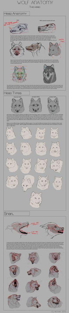 Wolf Anatomy - Part 3 by Autlaw on deviantART: