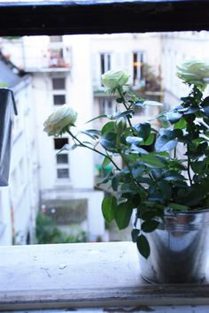 Urban Jungle Bloggers Houseplant of the Month July: Potted Rose Public Spaces, Houseplants, Container Gardening, Planter Pots, Around The Worlds, Urban, Rose, Pink, Indoor House Plants