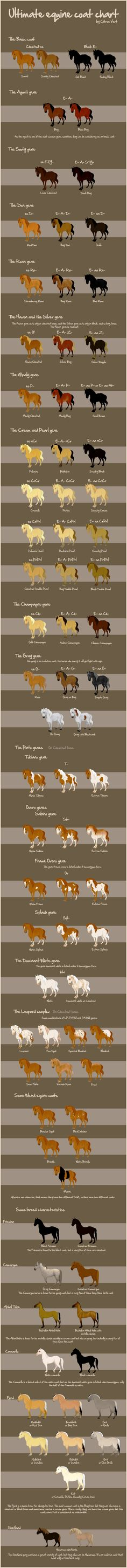 Coat colors including genetics - color characteristics by breed. For future reference.