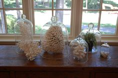 Collection of coral displayed under bell jars.
