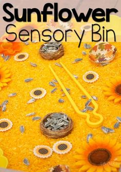 This sunflower sensory bin is a perfect way to work on fine-motor skills while exploring the beautiful yellows of sunflowers! Your preschoolers will love playing in this sensory bin! Try this learning activity today! Fall Sensory Bin, Sensory Tubs, Sensory Boxes, Sensory Activities, Sensory Play, Learning Activities, Preschool Activities, Preschool Learning, Kindergarten Sensory