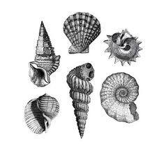 "Items similar to Vintage Shells Temporary Tattoos - She Sells Seashells! on Etsy - ""She Sells Seashells"" Six lovely vintage seashells to adorn your inner mermaid. Shells are in - Wolf Tattoos, Fake Tattoos, Mini Tattoos, Temporary Tattoos, Tatoos, Seashell Tattoos, Mermaid Tattoos, 1 Tattoo, Tattoo Drawings"