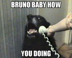 Dogs need to keep in the time to