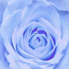 Blue Watercolor Rose Art Print