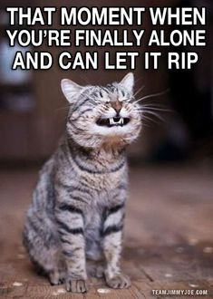Ahhhhhhh! – 15 Ways to Laugh: Funny Pics & Memes