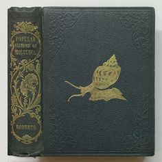 A popular history of the Mollusca | by Thomas Fisher Rare Book Library, UofT