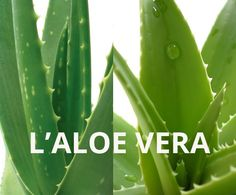 Recette concombre & aloe vera pour soulager les yeux