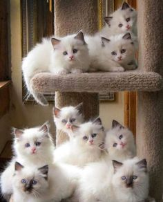 Instant cat tree, just add kitties!