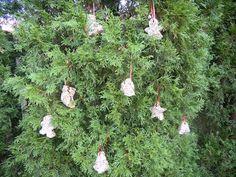 Birdseed feeder ornaments