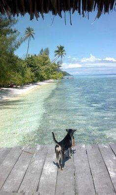 Top dog Raja Ampat Islands, Archipelago, Some Pictures, Underwater, Earth, Dogs, Animals, Bjorn Borg, Animales