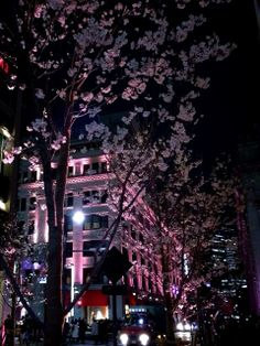 it looked beautiful at Nihonbashi ;) #sakura festival #coredo muromachi