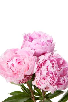 A mini bouquet of pink peonies!