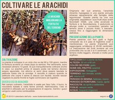 Come trapiantare potare e coltivare le more da giardino for Semina arachidi