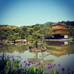 "44 mentions J'aime, 1 commentaires - Niya Photo 🌍📷 (@niyam1) sur Instagram: ""#japan #Kinkaku-ji #Kyoto #temple #travel #nature #photo"""