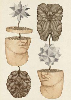El bonito estilo científico vintage en los dibujos de Katie Scott.   . . .                — Katie Scott vídeo vía CRANE tv