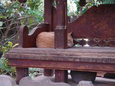 Cat asleep in a Hindu shrine