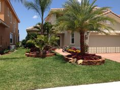 Sylvester date palm 10 feet clear trunk realpalmtrees Florida Install Landscape