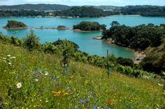 Waiheke has been named in the New York Times' top 46 travel destinations of 2013.