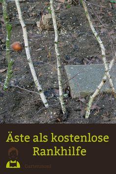 Äste als kostenlose Rankhilfe Äste vom Obstbaumschnitt oder aber z.B. von der Birke eignen sich prima als Rankhilfe für verschiedene Pflanzen (Erbsen, Buschbohnen, Zuckerschoten usw.)