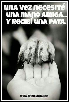Amistad Siempre fieles amigos nuestros peluditos ;-)gracias Tacho.     Al fiel Pancho