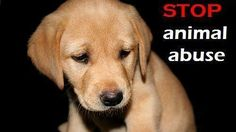 Petition · China Government: STOP ANIMAL CRUELTY · Change.org