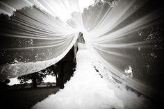 photo under the veil!