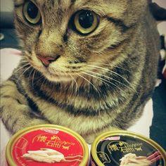 進貢品!#cats - @angeline_chen- #webstagram