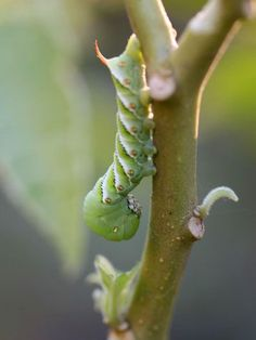Is your garden full of grubs and pests? If there are more than 10 grubs in a square foot, then it's time to treat your yard. Find out how to identify if grubs exist in your garden or lawn, and fix the problem early on. Also, discover how to naturally or chemically keep these pests away.