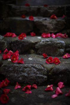 Steps in Hanajiri-no-mori, Kyoto, Japan Travel Photographie, Kyoto Japan, Japan Japan, Jolie Photo, Nihon, Japanese Culture, Wabi Sabi, Color Splash, Splash Art