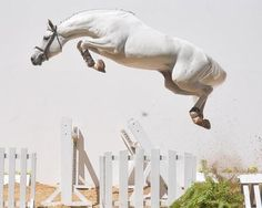 Lovely jump!  ~ getting  another jumper*dressage horse in about ten days....excited and nervous at the same time <3