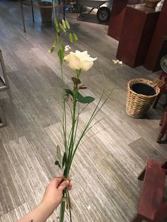 My Flower, Flowers, Home Decor, Decoration Home, Room Decor, Royal Icing Flowers, Home Interior Design, Flower, Florals