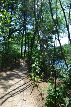 Pond Path @ Walden Pond. I walked it to see the site of Thoreau's cabin.
