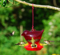 Cooperative Treehouse Hanging Flutter Butter Feeder Fragrant Aroma Other Bird & Wildlife Accs Bird & Wildlife Accessories