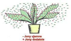 """Adepci sztuki Feng Shui poświęcili bardzo dużo uwagi na obserwację przyrody, która otacza nasz dom, wiele uwagi poświęcili kwiatom, krzewom i drzewom zakładając, że mogą one korzystnie wpływać na równowagę i harmonię w domu. Uznali, że odpowiedni dobór roślin czy to na klombie przy domu czy we wnętrzu w istotny sposób wzmacnia energią """"Chi"""""""