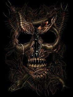 Bug Skull ~ Andrew Dobell